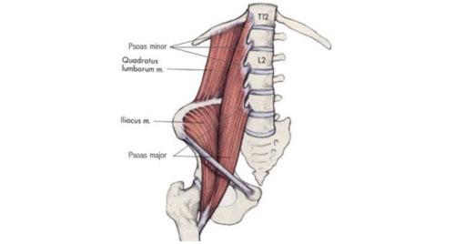 Psoas muscle pain hip groin